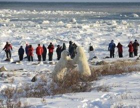 polarbearssparringsealriver
