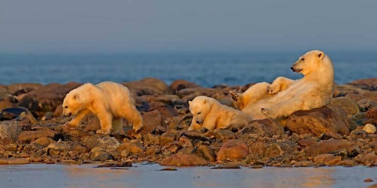 PolarBears-Birds&Belugas