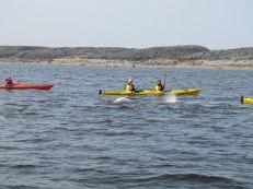 arctic-discovery-kayak-with-belugas