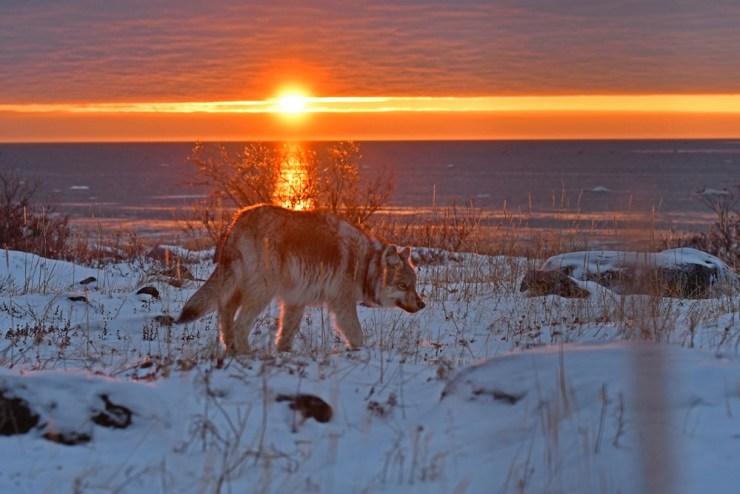 sunsetwolfsealriverlodge