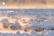 """Fire On Ice. Grand Prize winner in The Weather Channel's 2016 """"It's Amazing Out There"""" Photo Contest. Greg Gulbransen. Seal River Heritage Lodge."""