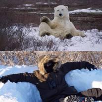 Polar bear poses. The Nature Junkies.