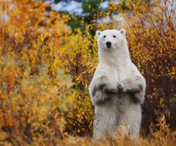 polarbearstandingruth1