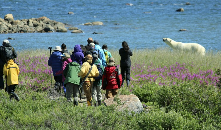 Churchill Wild guests viewing polar bears at Seal River Heritage Lodge.