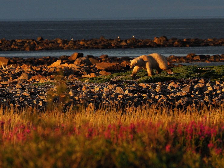 The fall colours of Seal River beckon. Quent Plett photo.