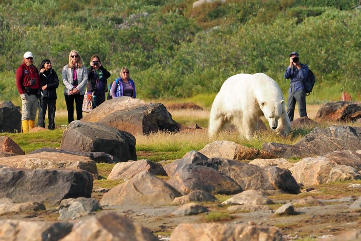 Up close and personal with a polar bear at Seal River Heritage Lodge. Quent Plett photo.