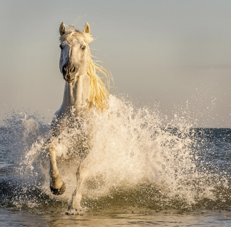 Wild horse at Camargue. Ann Fulcher photo. Click image for more.