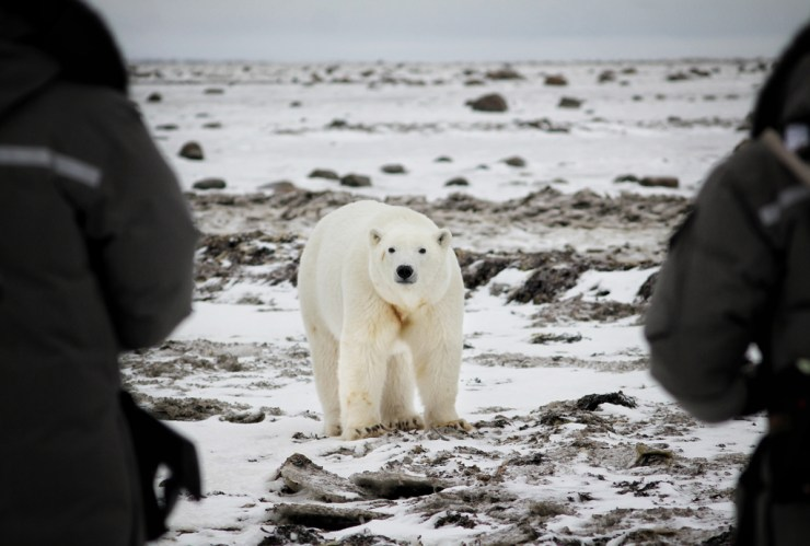 Face-to-face with a polar bear on Hudson Bay. Dax Justin photo.