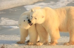 Mom and cub at Dymond Lake Ecolodge.