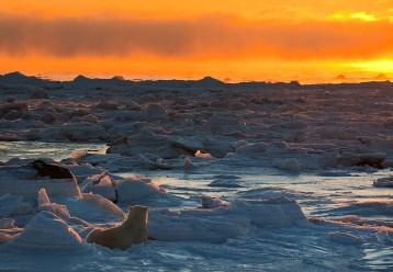 polar-bear-sunset-churchill-wild-seal-river-heritage-lodge-kristina-thompson