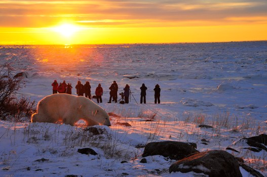 Guests watching polar bear in sunset at Seal River Heritage Lodge. Ian Johnson photo.