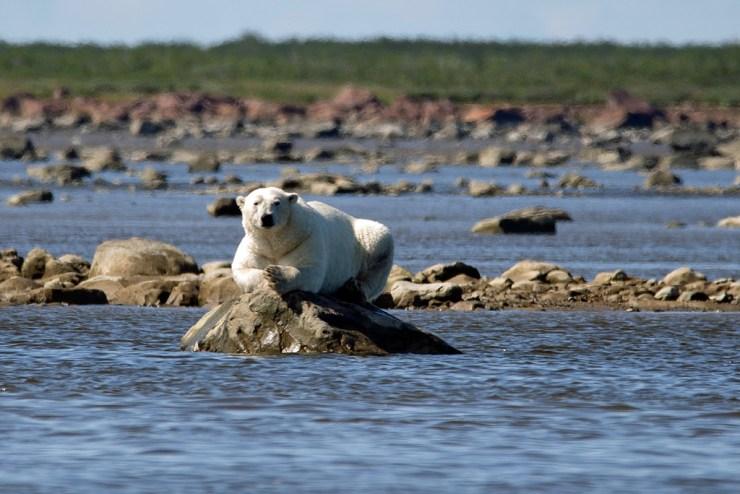 Waiting for belugas at Seal River. Boomer Jerritt photo.