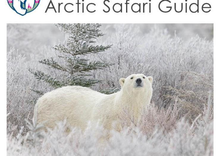 Churchill Wild 2021 Polar Bear Safaris and Polar Bear Walking Tours Brochure