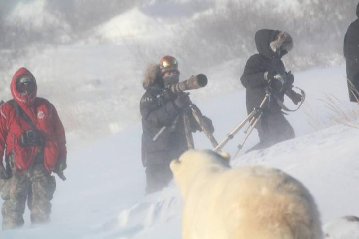 Bear in a storm with photographers. Polar Bear Photo Safari. Seal River Heritage Lodge. Redeana Villeneuve photo.