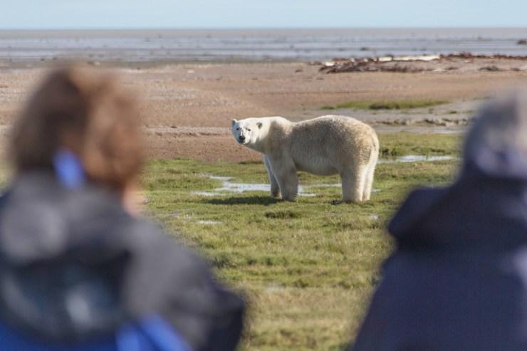 Guests photographing polar bears at Nanuk Polar Bear Lodge. Robert Postma photo.