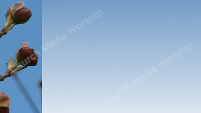 Blue Background flower trim Christian Worship Background. High quality worship images for use to spread the Gospel and enhance the worship experience.
