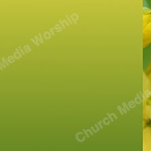 Lime Flower trim Christian Worship Background. High quality worship images for use to spread the Gospel and enhance the worship experience.