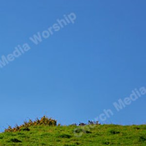 Lost sheep in Field Christian Worship Background. High quality worship images for use to spread the Gospel and enhance the worship experience.