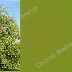 Peaceful tree Green Christian Worship Background. High quality worship images for use to spread the Gospel and enhance the worship experience.