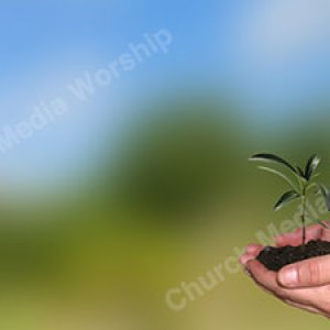 Plant growing in hand Christian Worship Background. High quality worship images for use to spread the Gospel and enhance the worship experience.