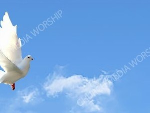 Dove in flight blue sky Christian Background Images HD