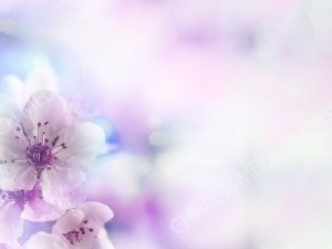 Light Purple Floral haze Christian Worship Background. High quality worship images for use to spread the Gospel and enhance the worship experience.