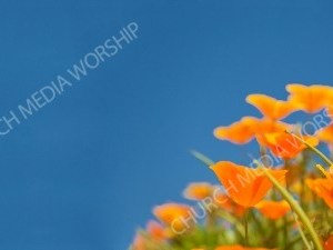 Nature flower2 Christian Background Images HD