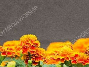 Nature flower3 Christian Background Images HD