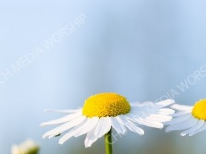 Nature flower4 Christian Background Images HD