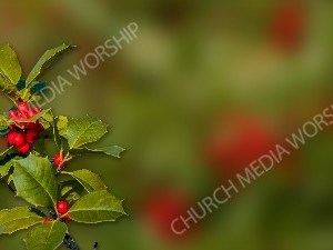 Sprig of Holly garden blurred matte Christian Worship Background. High quality worship images for use to spread the Gospel and enhance the worship experience.