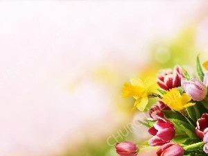 Spring Flowers bouquet Cream Background Christian Worship Background. High quality worship images for use to spread the Gospel and enhance the worship experience.