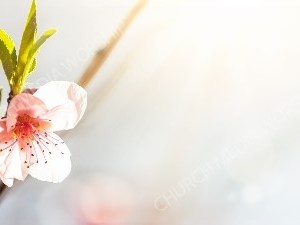 pink and white orchid Christian Worship Background. High quality worship images for use to spread the Gospel and enhance the worship experience.