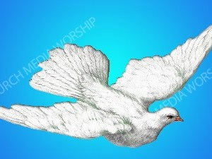 Holy Dove Christian Worship Image. High quality worship images for use to spread the Gospel and enhance the worship experience.