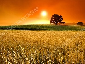 Sunset Wheat V1 Christian Worship Image. High quality worship images for use to spread the Gospel and enhance the worship experience.