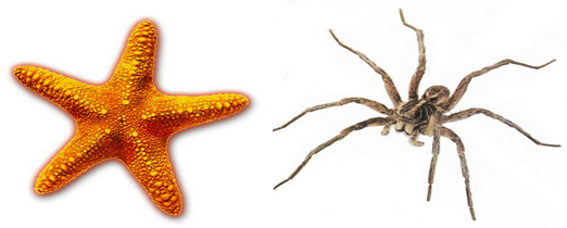 Of Spiders and Starfish