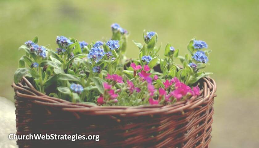 flowers growing in a basket