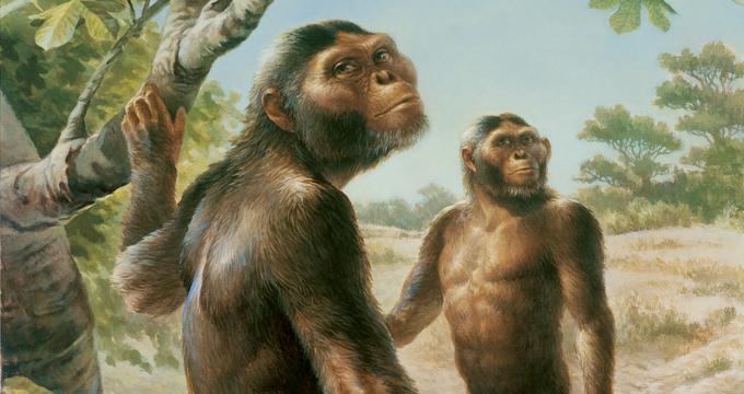 "No estaba sola: Datan el esqueleto de un Australopithecus contemporáneo de ""Lucy"""