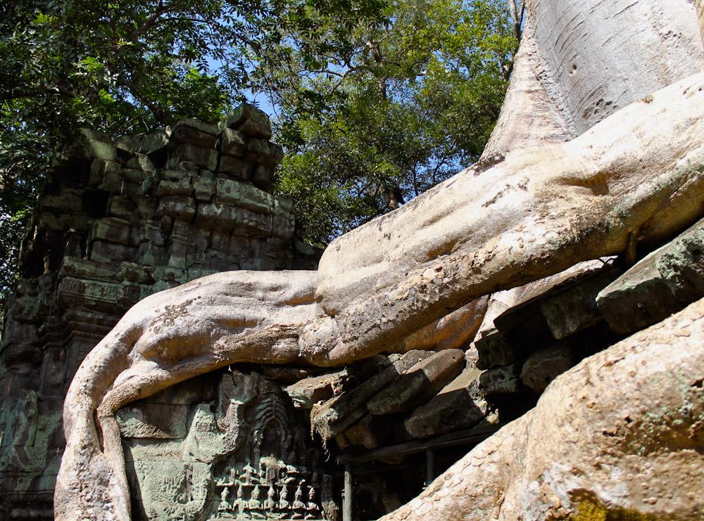 Ta Prohm Siem Reap Cambodia-24