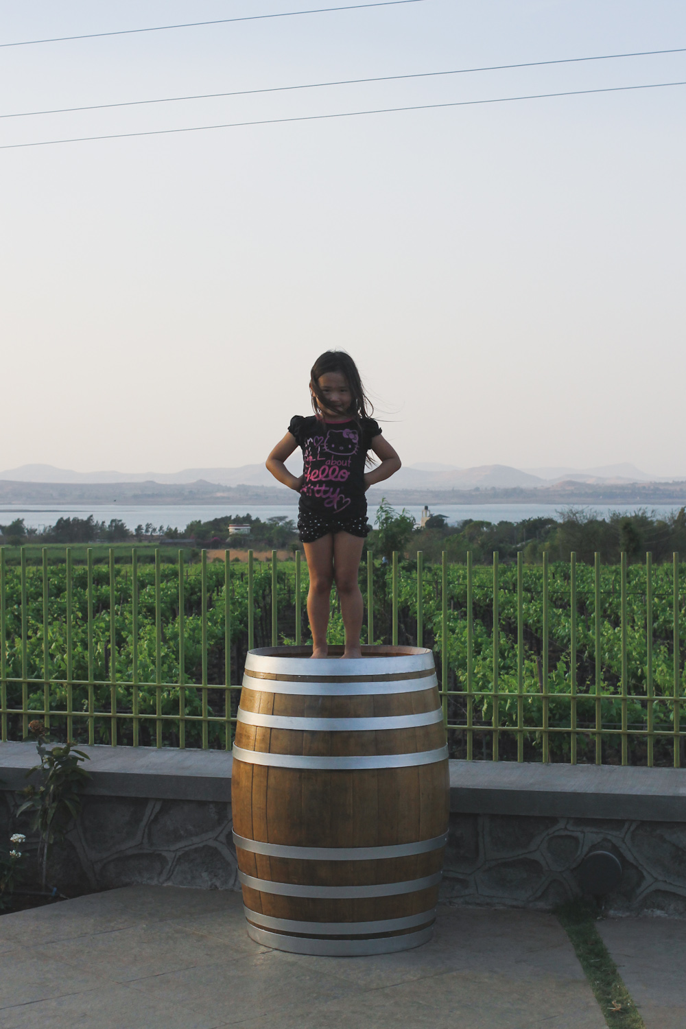 York Winery Nashik-28