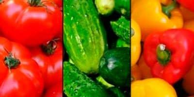 Maquinaria de clasificar verdura