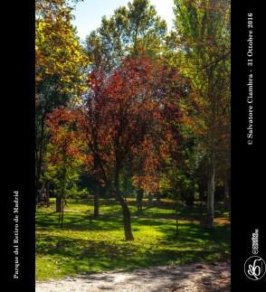 D8B_0103_bis_Madrid_Parque_del_Retiro