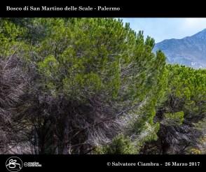 _D7D6396_bis_Bosco_di_San_Martino_delle_Scale