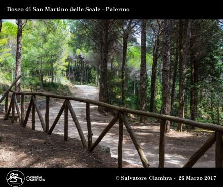 D8B_3482_bis_Bosco_di_San_Martino_delle_Scale