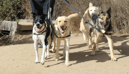 Pet Walking Services - Group Dog Walking Services by CiaoCiao PetCare in Irvine and Newport Beach