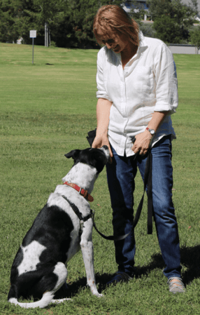 Walks For Dogs Who Are Difficult On Leash - Irvine and Newport Beach