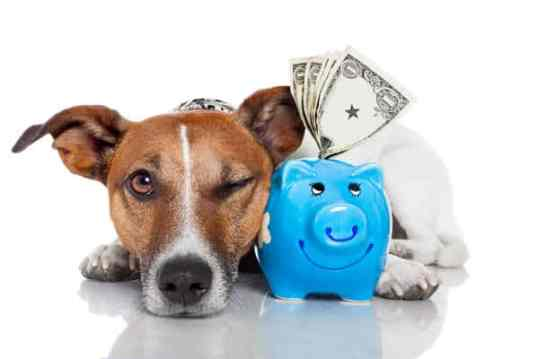 Dog walking fees and payment information for dog walking services