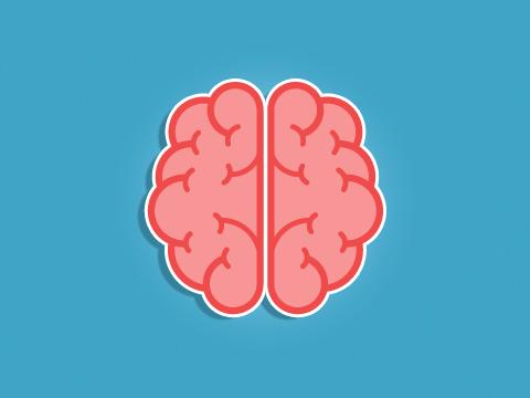 e-learning-plongee-MF2-systeme-nerveux-cerveau