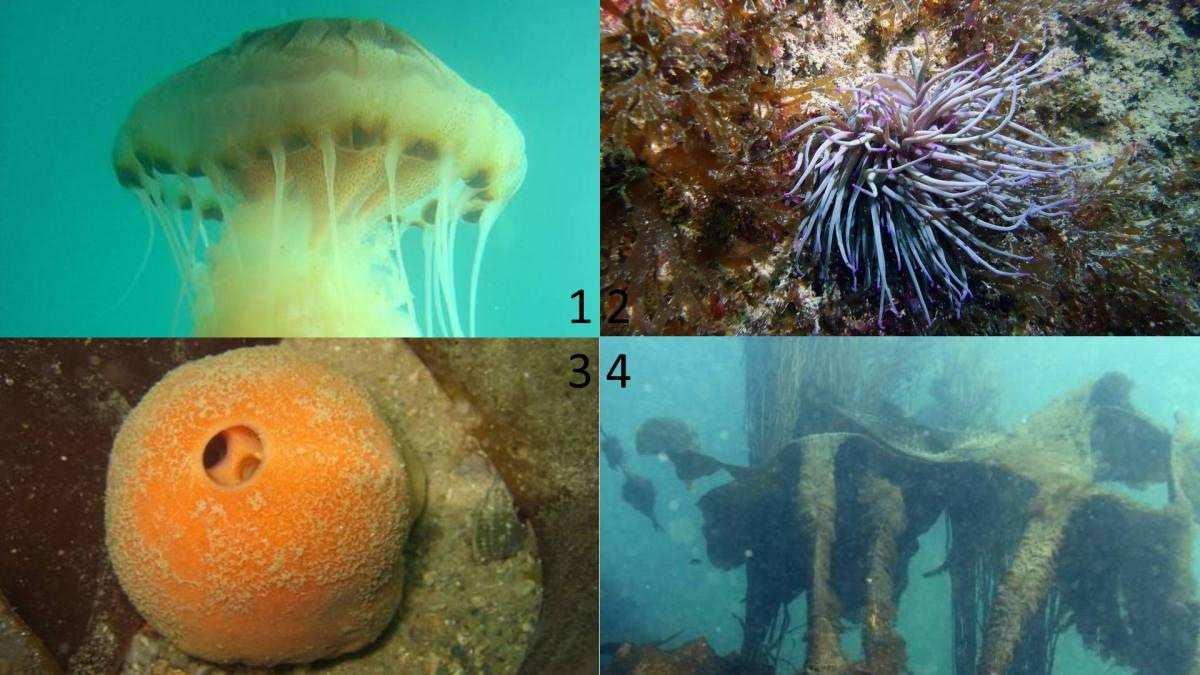 Quiz La défense des animaux marins