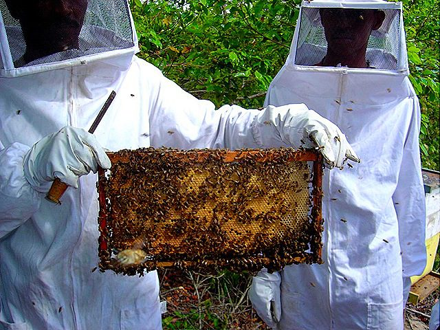 ANOAPIMEL divulga nota de alerta sobre acidentes com abelhas em Nova Olinda do Maranhão