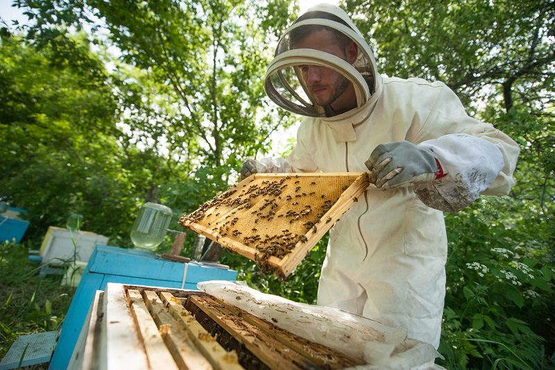 Maranhão é o 8º maior produtor de mel do Brasil
